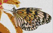 Vorlage für Ministeck Butterfly1 80x60cm