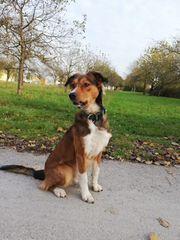 Traumhund Buddy sucht aktive Familie