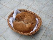 Tiersitting für Katze Maus Käfigtiere