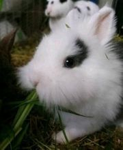 Süße Mini-Kaninchen
