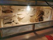 Terrarium mit Leopardengecko Pärchen