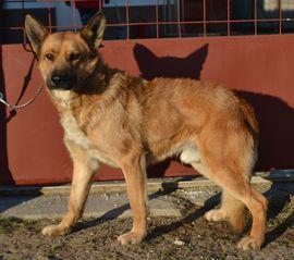 Rox möchte wieder vertrauen können: Kleinanzeigen aus Aachen Autobahn-Nord Gzg - Rubrik Hunde