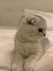 BKH Katzenbaby mit Zubehör neu