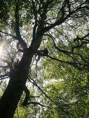 Fachmännische Totholzentnahme vom Baumpflege Profi