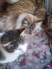 Katzen Mimi und Susi suchen