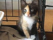 Ferry tolles Katzenkind ca 2