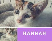 Hannah Katze aus dem Tierschutz