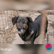 Rodrigo - braucht eine Chance