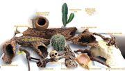 Aquarium-Zubehör Rindenhöhlen-Kaktus-Haus-Schädel-Wurzeln