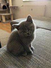 BKH kitten 30 4 21