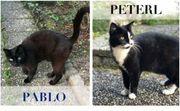 Peterl und Pablo