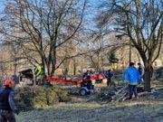 Baumfällungen baumklettern baumpflege Baum fällen