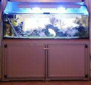 Meerwasser Aquarium Auflösung Korallen Fische