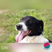 Cifri - Der kleine Rebell