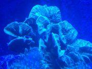 Meerwasser Fische Korallen und Lebendgestein
