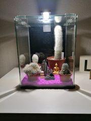 Aquarium für Garnelen
