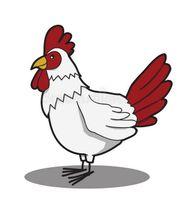 Verschiedene Hühner Rassen zum abgeben