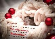 Ratten Postkarten 5 mögliche Motive