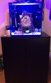 Meerwasser Aquarium Red Sea Max