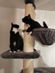 Zwei Bruderschen suchen neues Zuhause