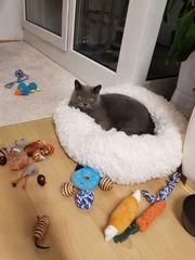 Biete liebevolle Katzenbetreuung privat an