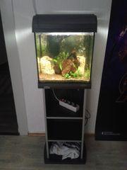 30 Liter Tetra Aquarium mit