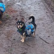 Dogwalking Gassiservice