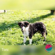 Toni - Lockenkopf will Verstecken spielen