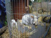 2 Hasen 1 Zwerknaninchen und