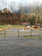 Pferdebox zu vermieten