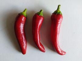 Bild 4 - Samen Paprika rot Chili De - Hamburg Langenhorn