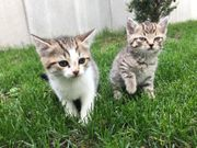 Zwei Wunderschöne Katzenbabys