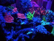 Meerwasser LED Vertex Illumina SR360-600