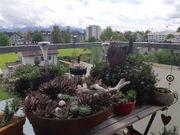 Suche naturnahen Lebensraum in Bregenz