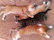 Kätzchen Katzenbabys Kitten