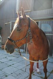 Pferde Vorschule hat Plätze frei