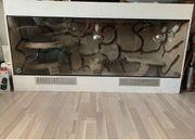 DRINGEND Terrarium mit Bartagame und