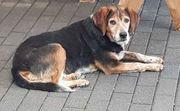 Hundeomi Rita sucht ein Zuhause