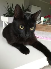 Wir bitten um Mithilfe-Katze vermisst