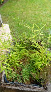 Weidekorb mit Bambuspflanze und Zyperngras