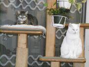 Unsere Katzendamen suchen ein liebevolles