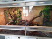 2 königspython Terrarium