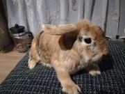 Kaninchen Mädchen suchen Zuhause