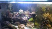 Meerwasser Aquarium komplett 1000 liter