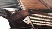 Wunderschöne Hengstfohlen von Maracana