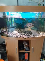 Aqarium240 Ltr mit Wasserschildkröte