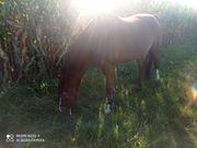 Ponyreiten Ponypflegen