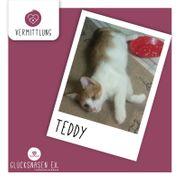 Katzenbub Teddy möchte Deine Welt