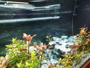 Aquarium rio 180inklusiv led beleuchtung