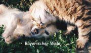 Urlaub mit KATZEN Hunden - Bayerischer